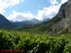 vineyards-chamoson