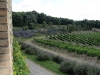 poggio-salvi-vineyards-2_0